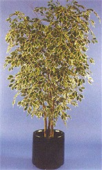 5-1/2' Hawaiian Ficus Artificial Tree