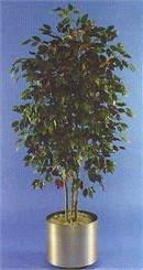 5-1/2' Red Ficus Artificial Tree